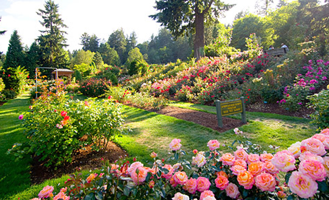 Visit the International Rose Test Garden